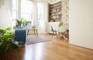 décoration plantes interieur